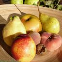 quince apple pear nectarine indian-blood-peach vineyard-peach  medlar
