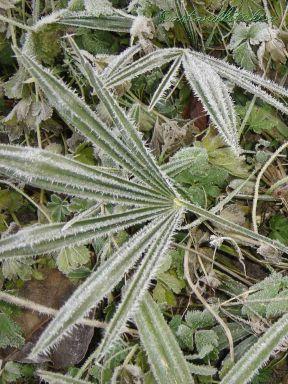green frozen palm