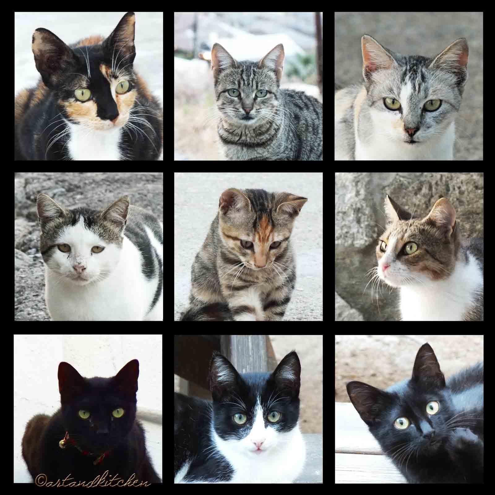 9 Greek Cats Art Artandkitchen