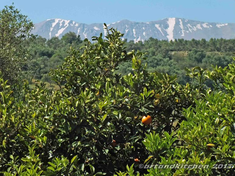 Orange trees in front of the white mountains on Crete