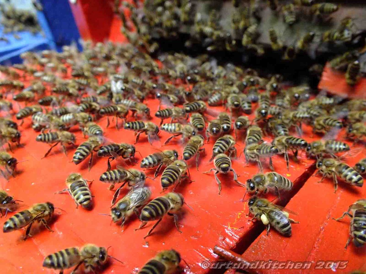 Homesick Bees Swarm Went Back Home
