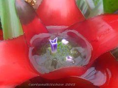Royal Botanic Gardens Melbourne Bromeliaceae