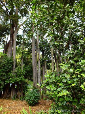 Royal Botanic Gardens Melbourne Garden Style