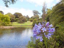 Royal Botanic Gardens Melbourne Lake