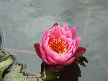 Royal Botanic Gardens Melbourne See Roses