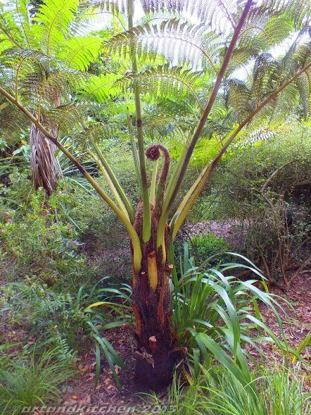 Royal Botanic Gardens Melbourne Tree Fern