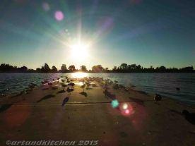 Albert Park Lake 3