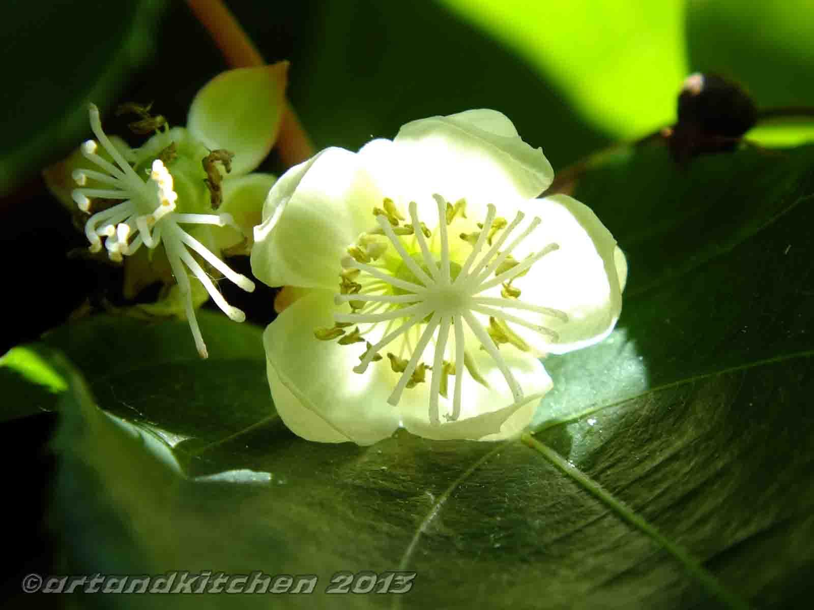 Kiwi Flower Artandkitchen