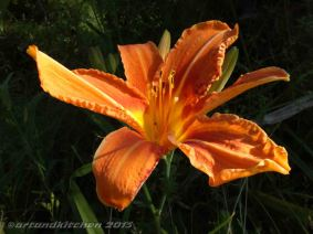lily fower
