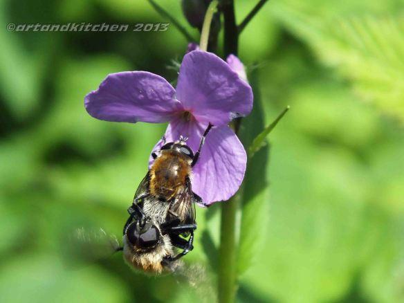 bubble bee couple 2