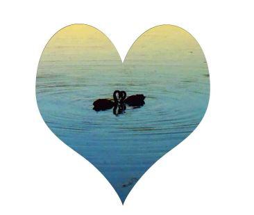 Lakes Entrance Swanes Sunset Love