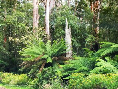 To Otway National Park 6