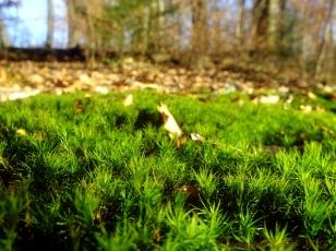 moss warm winter day