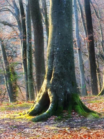 tree warm winter day
