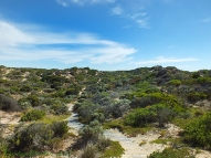 Coorong-Nationalpark 15