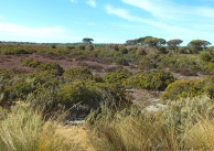 Coorong-Nationalpark 19
