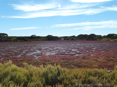 Coorong-Nationalpark 20