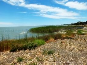 Lake Albert 1