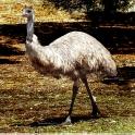 tower hill emu big