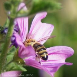 malva and bee 2