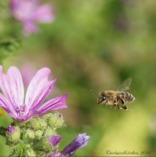 malva and bee 6