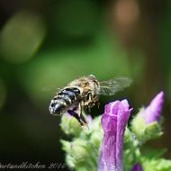 malva and bee 8