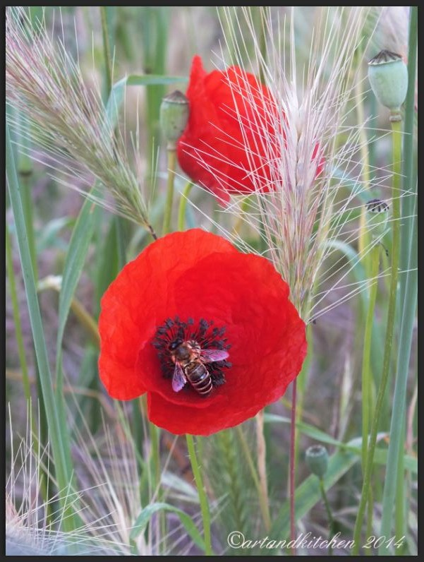 Poppy Flower and Bee
