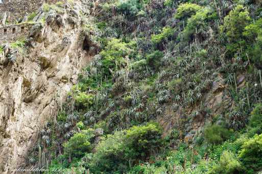 Sacred Valley (16)