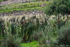 Sacred Valley (28)