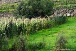 Sacred Valley (29)