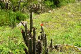 Sacred Valley (7)