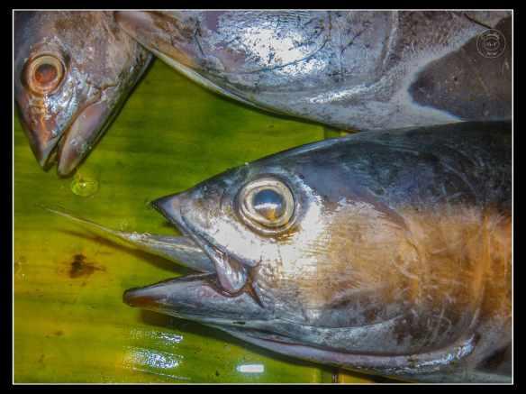 big-fish-eats-small-fish