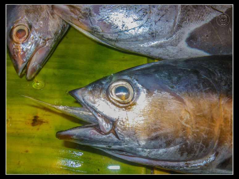 December 5th advent 2016 artandkitchen for Big fish eat small fish