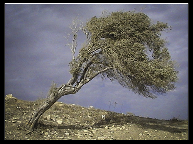 wind-shape-our-life