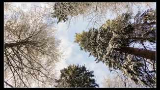 schwarzwald-2017-3-of-28